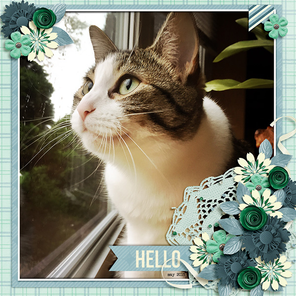 Created by weaselwatchr. I love cat pictures and this layout is just gorgeous!